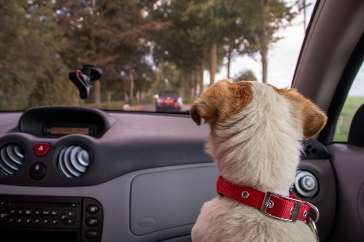 Why is it Important to have Window Tints When You have Pets
